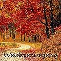 Waldspaziergang - Hängematte für die Seele: Naturgeräusche (ohne Musik) zur Entspannung von Körper und Geist Hörbuch von Yella A. Deeken Gesprochen von:  N.N.