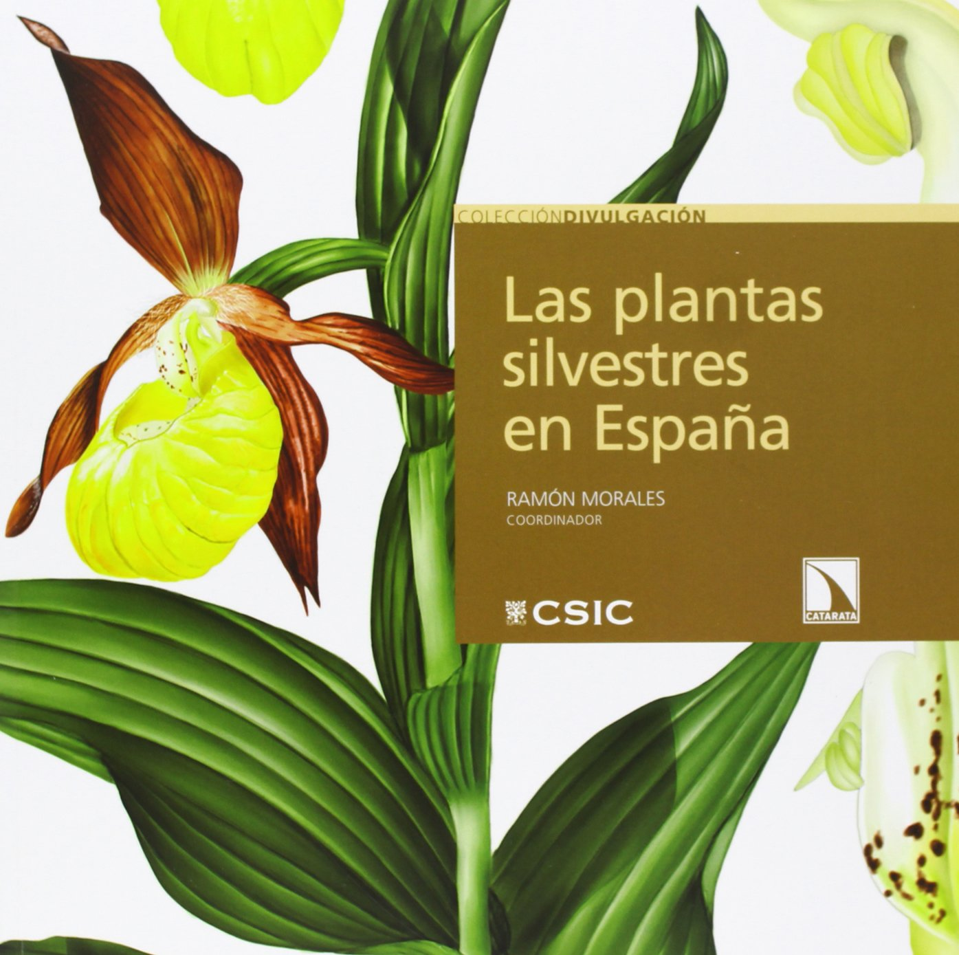 Las Plantas Silvestres En España (DIVULGACION): Amazon.es: Ramón Morales: Libros