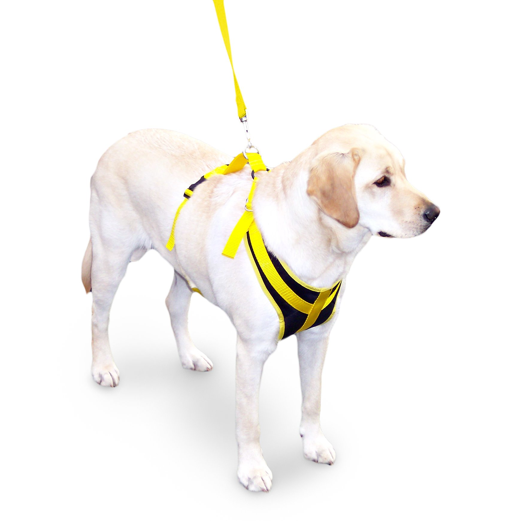 Walkin' Front Safety Dog Harness w/Seatbelt & Leash