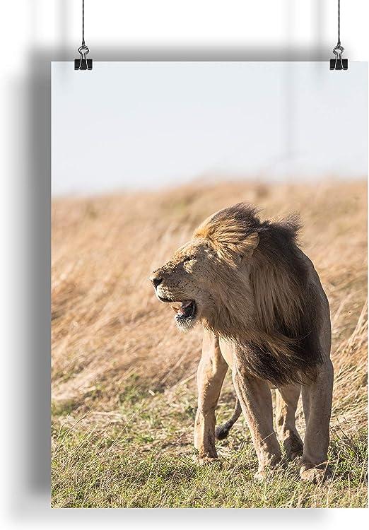 Wild Nature Lion Look  A0 A1 A2 A3 A4 Satin Photo Poster a1462h