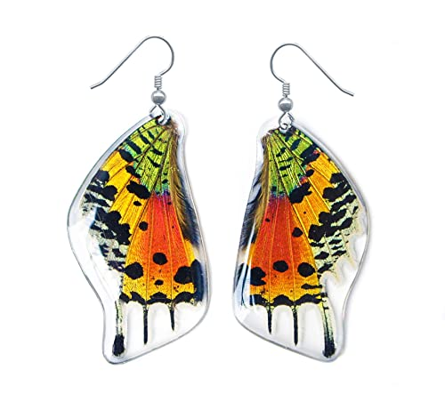 d97deaf3ced5d6 Real Butterfly Wing Earrings - Sunset Moth Butterfly Wing Jewelry  (Laminated)