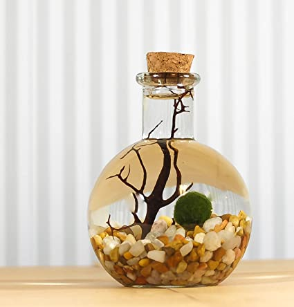Amazon.com : Marimo Moss Ball Round Bottle Vase With Cork Live ... on cheap round glasses, cheap vases for centerpieces, cheap white ceramic vases, cheap plastic vases, cheap mirrored vases, cheap round beds, cheap round mirrors, cheap round pillows, cheap round baskets, cheap decorative vases, cheap tall vases, cheap round planters, cheap silver vases,