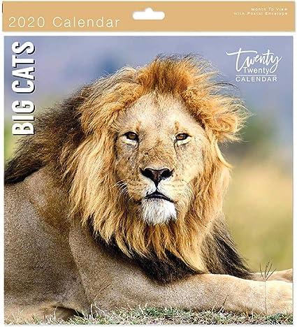 Calendario de pared cuadrado con diseño de gatos grandes 2020 + calendario de animales en peligro gratis 2019-05632.: Amazon.es: Oficina y papelería