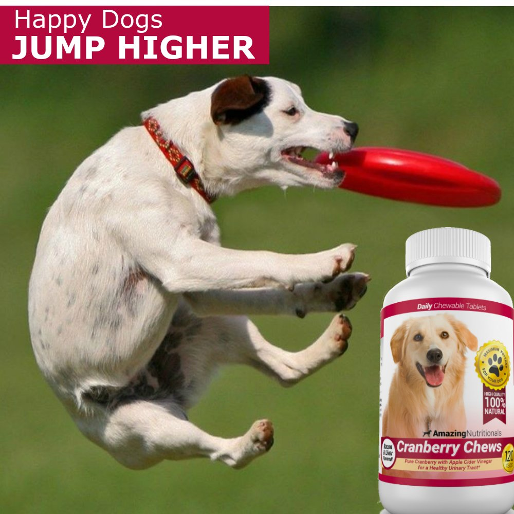 Image titled Prevent UTI in Dogs Step 1