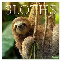 Sloths 2019 Calendar