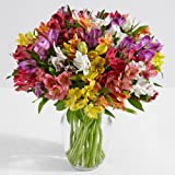 ProFlowers - 25 Count Multi-Colored 100 Blooms of Peruvian Lilies with Large Ginger Vase w/Free Clear Vase - Flowers