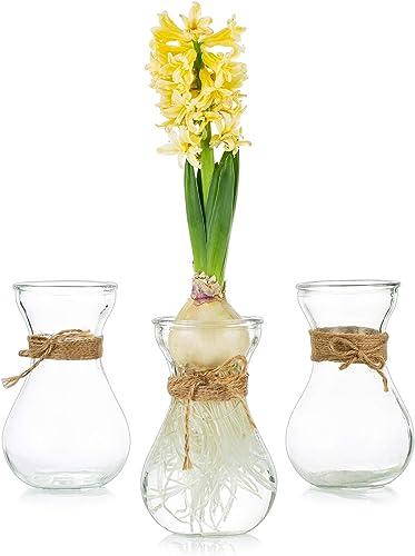 Glass Hyacinth Flower Vases 3PCS/Set Vases