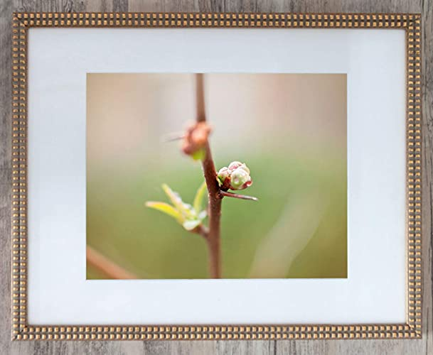 Raindrop On Branch, Limited Edition 1, Photo 2 Of 4   Framed Office Art