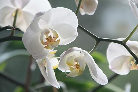 Bayer Garden Top Gotero Orquideas - Fertilizante diluido especial para orquideas 40 ml: Amazon.es: Jardín