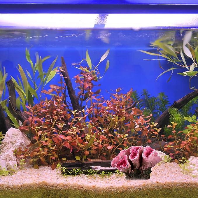 ueetek Acuario Decoración Coral Artificial Planta pez Tank Decoración (Rojo): Amazon.es: Productos para mascotas