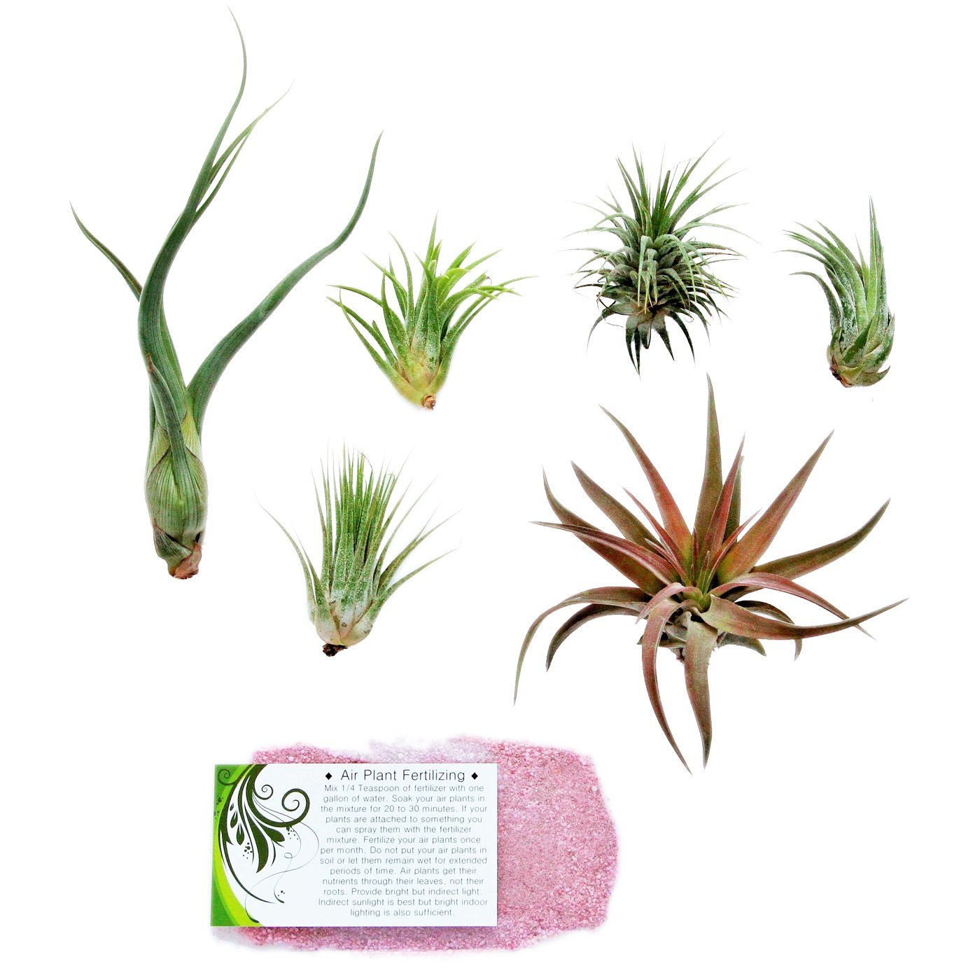 Air Plant Shop's Grab Bag of 6 Plants + Fertilizer Packet - Free PDF Air Plant Care eBook with Every Order - House Plants - Air Plant Variety - Fast Shipping from Florida