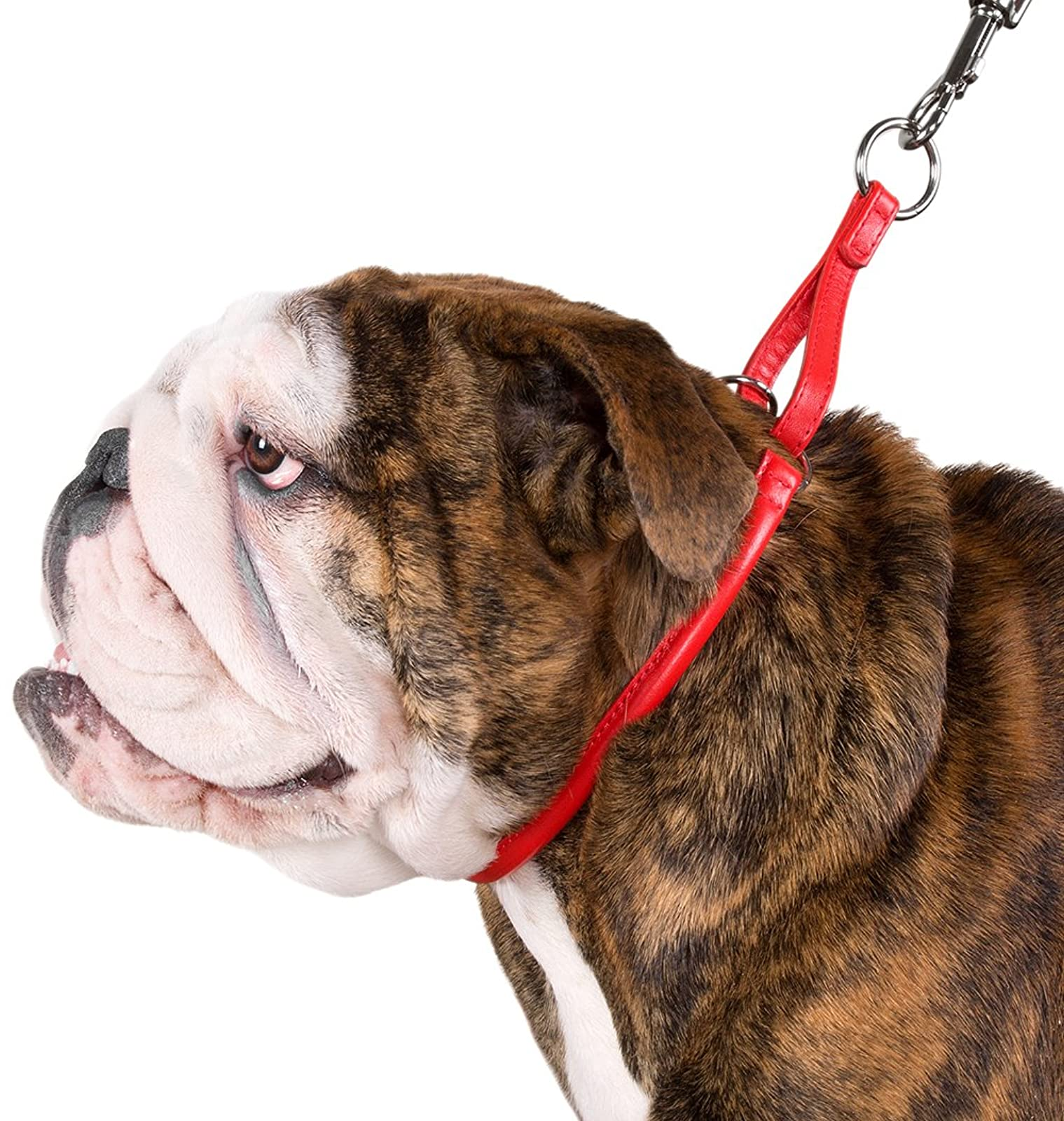 CollarDirect Rolled Martingale Dog Collar Training Genuine - 8