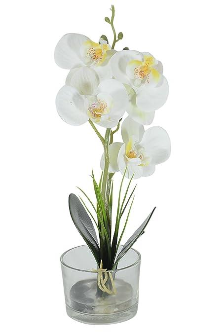 Buy scrafts wooden white round flower glass base artificialdryfaux scrafts wooden white round flower glass base artificialdryfaux flowers arrangement 3x3x1inches mightylinksfo