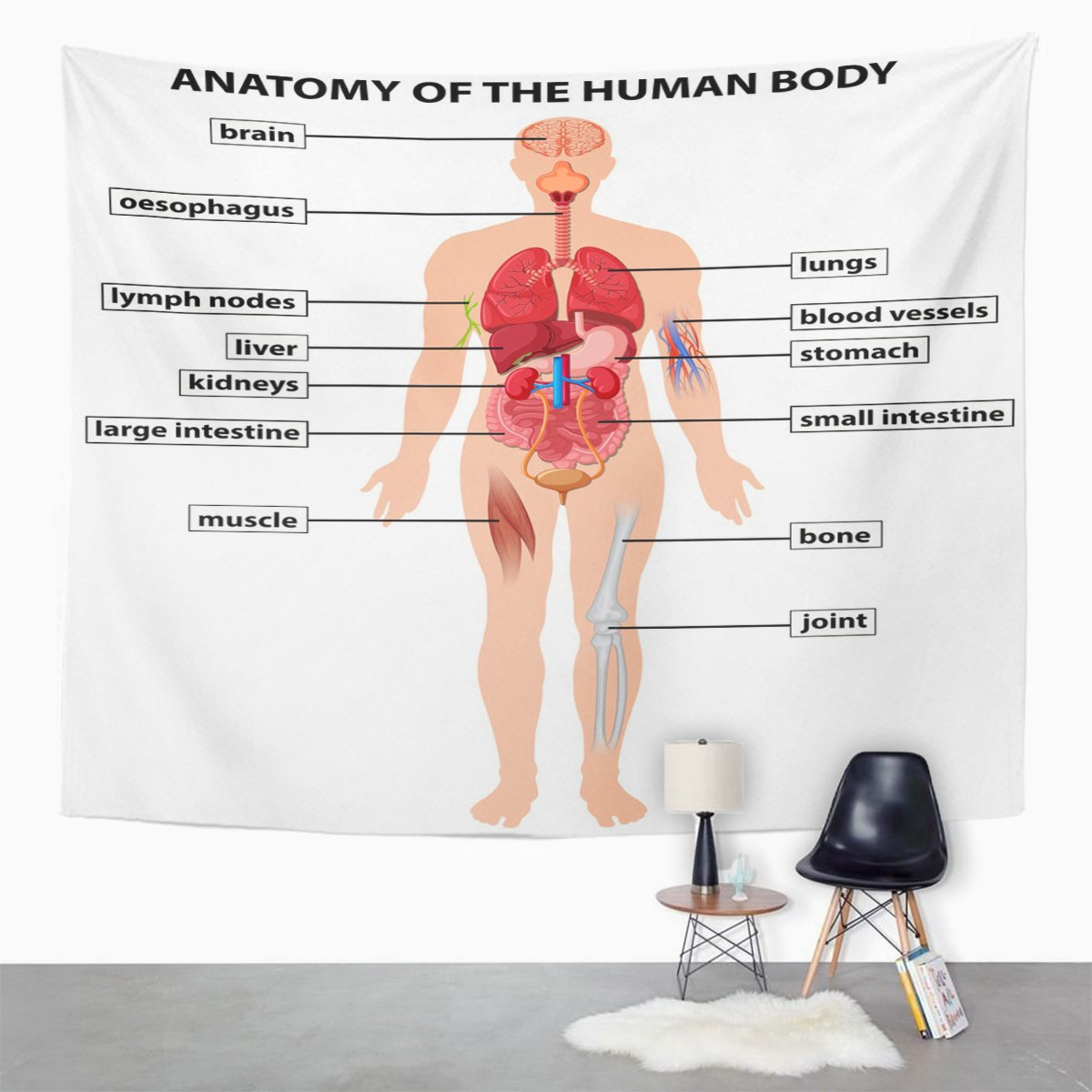 Amazon Tompop Tapestry Muscle Diagram Showing Anatomy Of Human