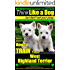 West Highland Terrier, West Highland Terrier Training AAA AKC: Here's EXACTLY How To TRAIN Your West Highland Terrier (West Highland White Terrier, West ... Terrier Training AAA AKC:on Kindle Book 1)