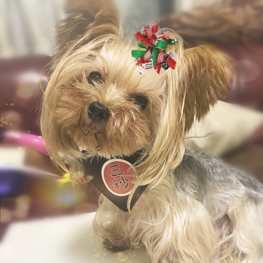 Hixixi 20pcs//Pack Pet Dog Cat Xmas Hair Bows Puppy Grooming Bows Hair Accessories Rubber Bands