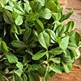 Fenugreek Herb Seeds - Non-GMO - 1 gram, approximately 60 seeds