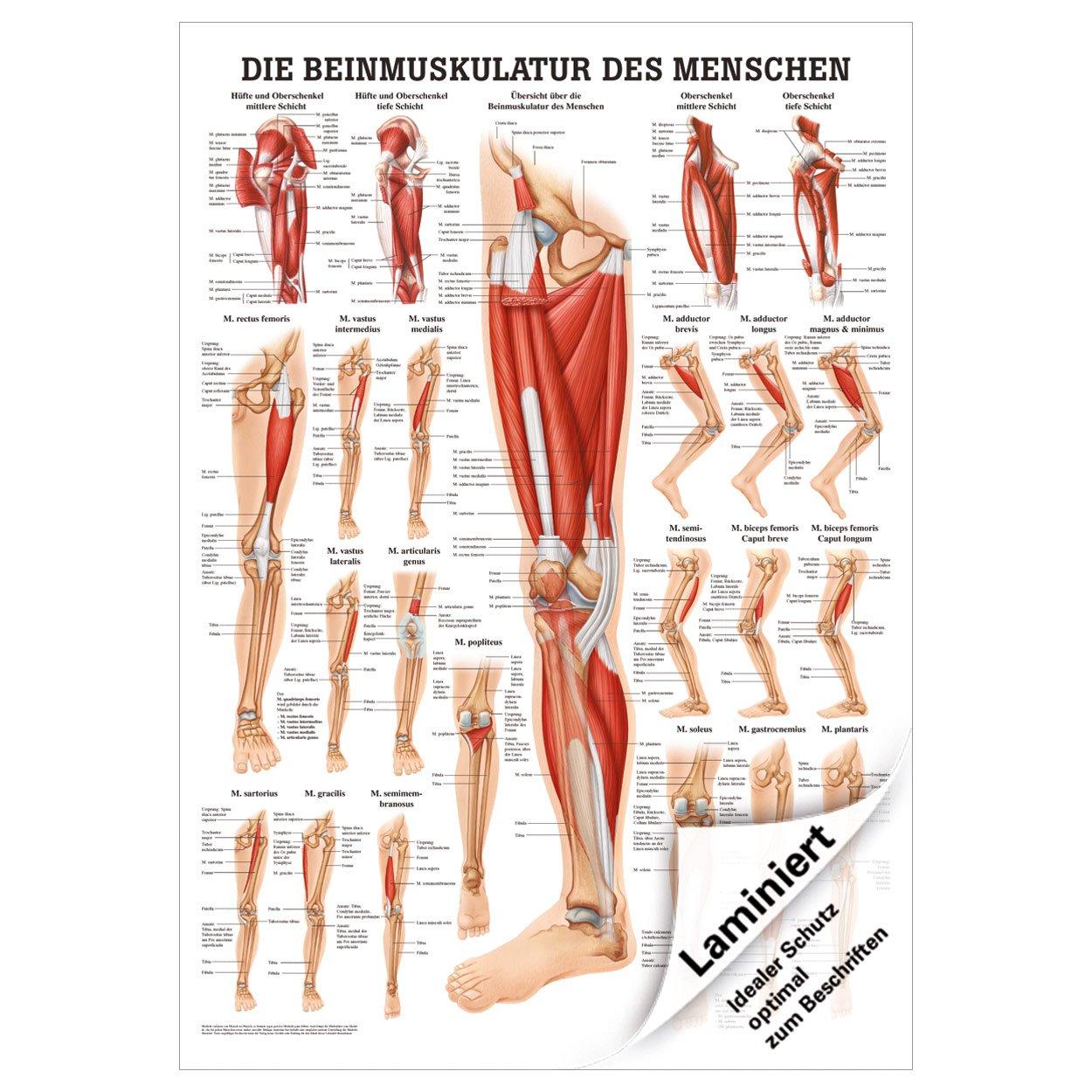 Ungewöhnlich Anatomie Lernmittel Zeitgenössisch - Menschliche ...