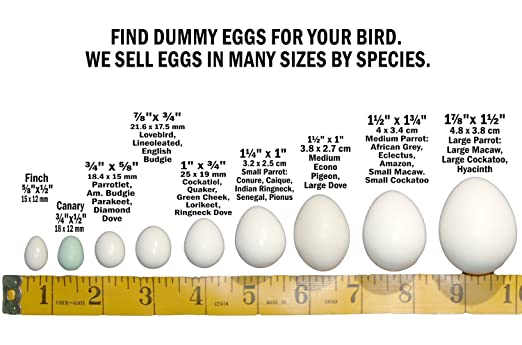 DummyEggs Small Parrot - Stop Laying with Fake Bird Eggs Conure, Caique,  Indian Ringneck, Senegal, Pionus  Solid Plastic Realistic Shape - 1-1/4