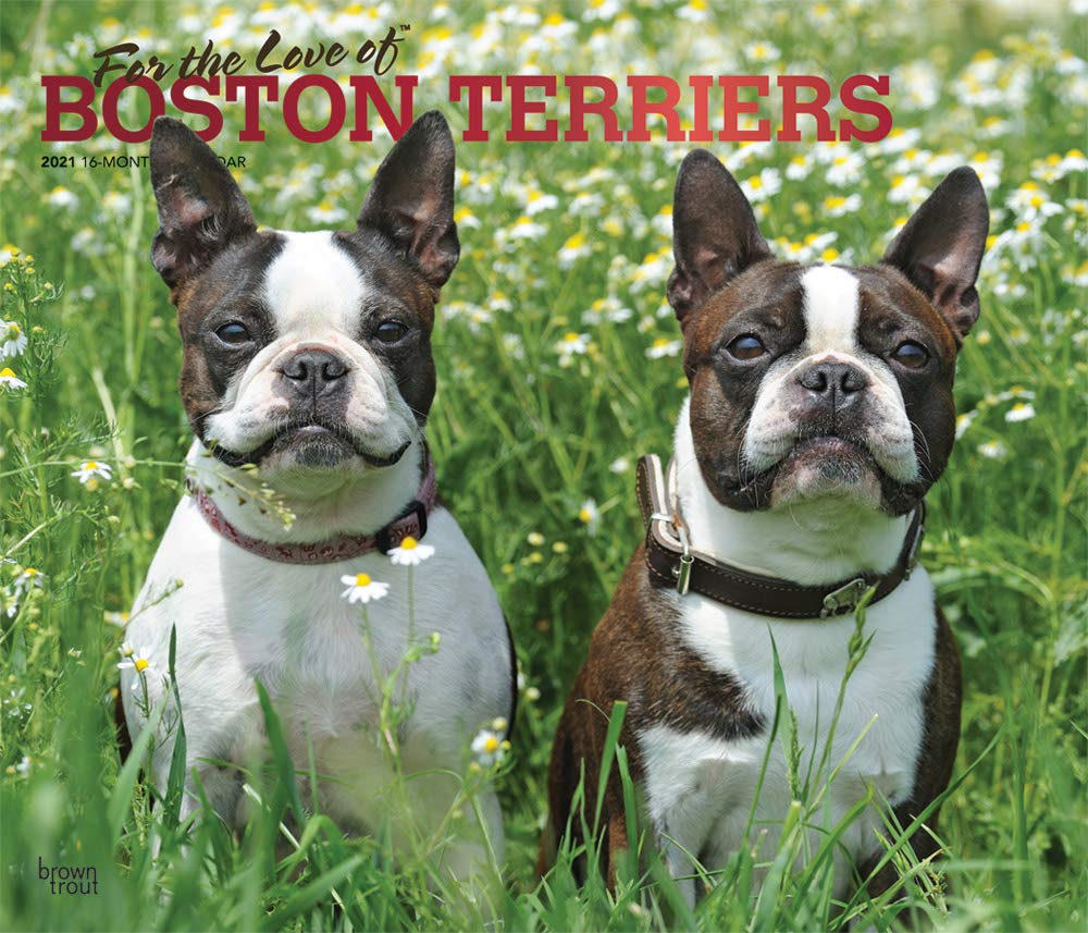 Pictures of Boston Calendar July 2021