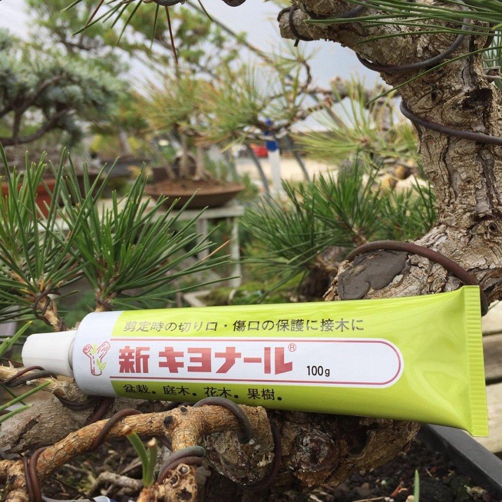 pasta bálsamo cicatrizante bonsái jardín