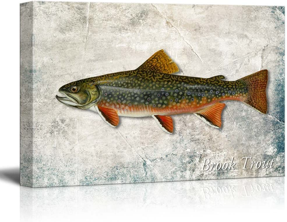 wall26 - Green Brook Trout Fish Illustration on a Textured Background - Canvas Art Home Art - 16x24 inches