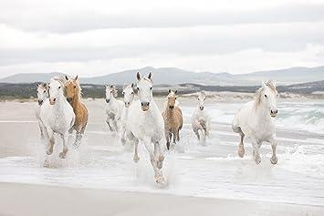 Komar   Fototapete WHITE HORSES   368 X 254 Cm   Tapete, Wandgestaltung,  Wandtapete