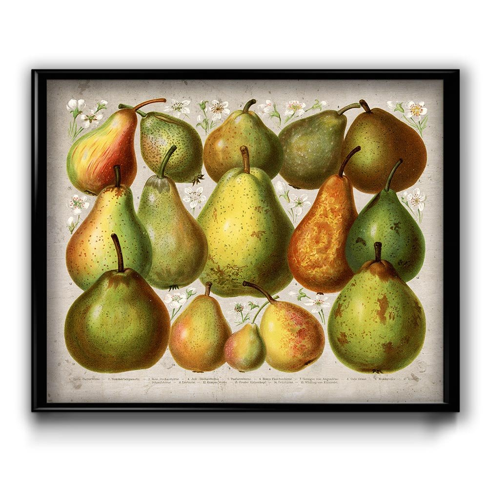 Amazon.com: Pears Vintage Print - Pear Poster - Pear Art - Pear ...