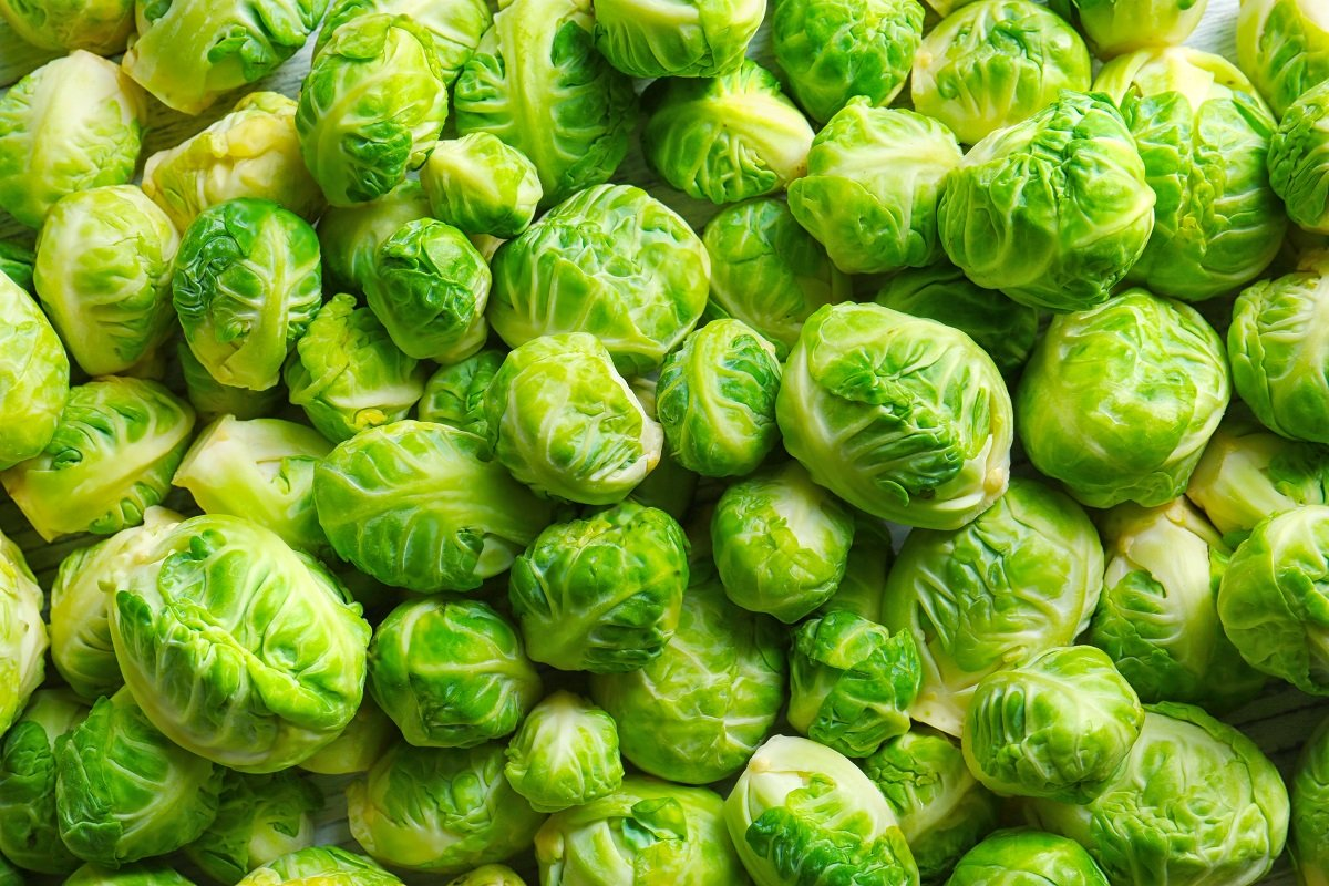 """dozends of heads from one Brussels sprout /""""Long Island/"""" 320 seeds"""