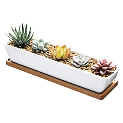 Amazon.com: Succulent Planter, Succulent Cactus Planter Pot, 11inch on designing a vegetable garden, designing a tulip garden, designing a bird garden, designing a drought tolerant garden, designing a rain garden, designing a flower garden, designing a wildlife garden, designing a shrub garden, designing a japanese garden, designing a rose garden, designing a cottage garden, designing a shade garden, designing a desert garden, designing a perennial garden, designing a container garden, designing a fern garden, designing a herb garden, designing a kitchen garden, designing a dog garden, designing a zen garden,
