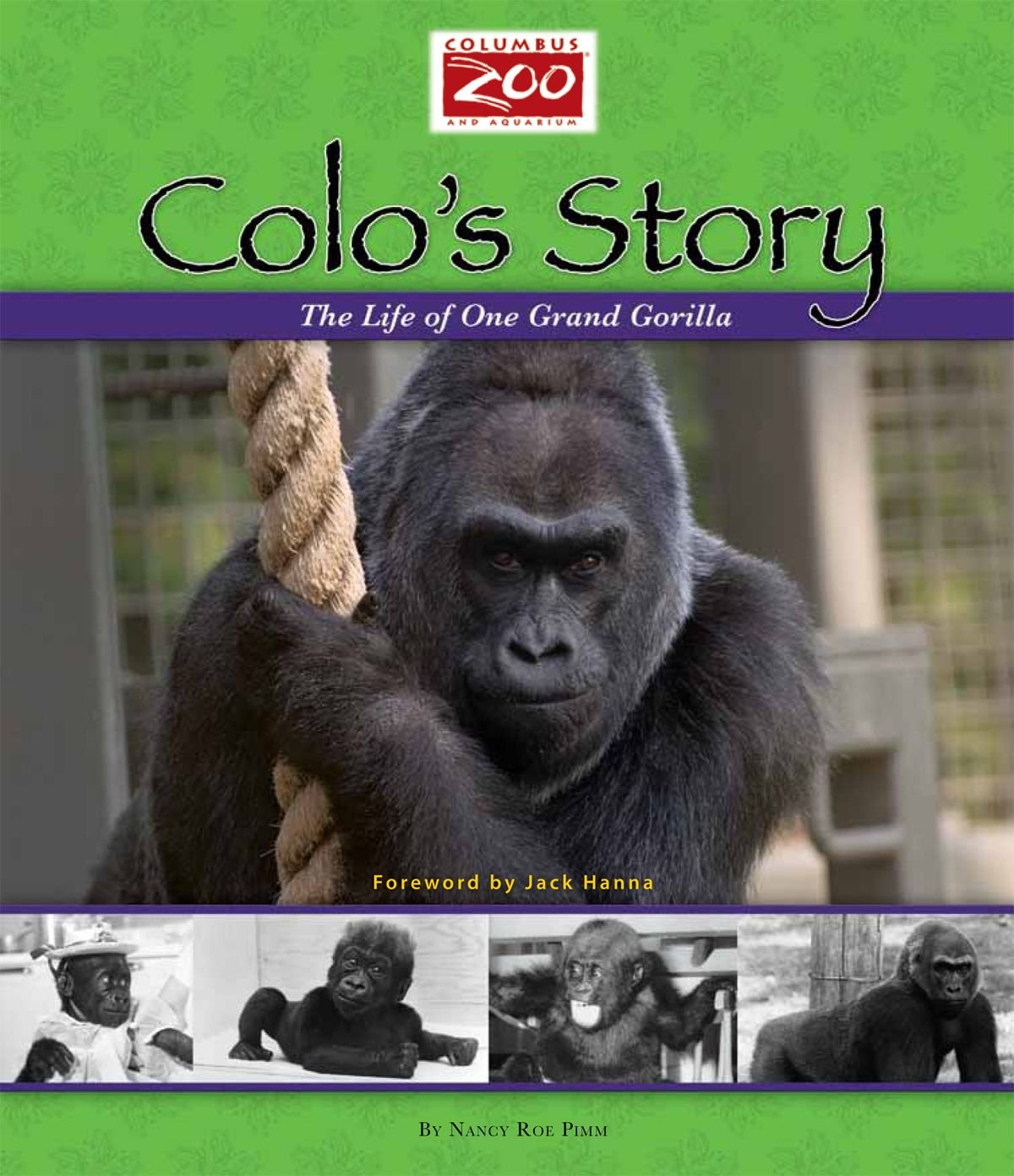Image result for colo the first gorilla born in captivity