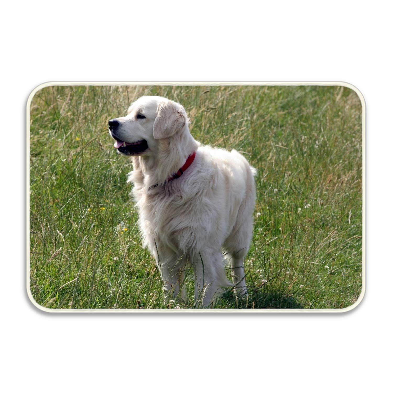 Amazon Com Animal Dogs Super Absorbent Anti Slip Mat Coral Carpet
