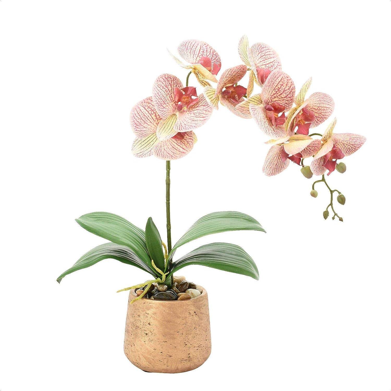 Amazon Com Phalaenopsis Orchids Floral Arrangement In Pot Home Kitchen