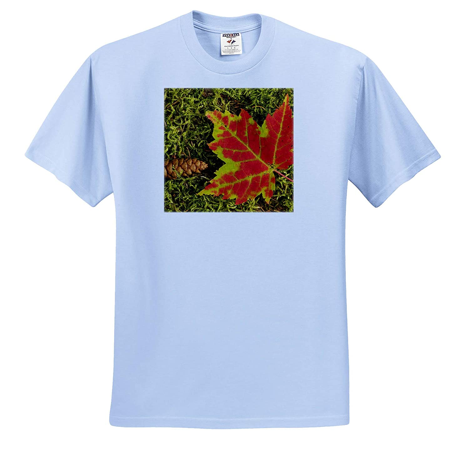 - Adult T-Shirt XL ts/_314854 Close-up of Maple Leaf and Pine Cone on Moss Autumn 3dRose Danita Delimont