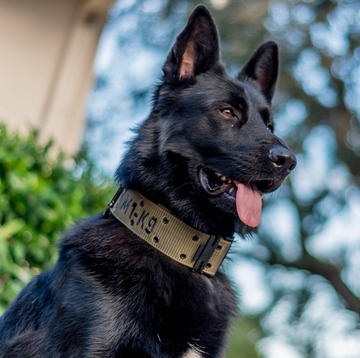 M1-K9 Big Military Dog Collar by M1-K9