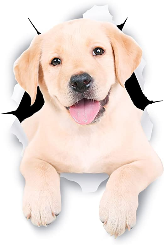 Winston & Bear Perro 3D pegatinas lindo Labrador blanco - 2 Pack ...