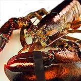 築地魚群 活オマール海老 ロブスター 450-500gサイズ アメリカ・カナダ産 1尾