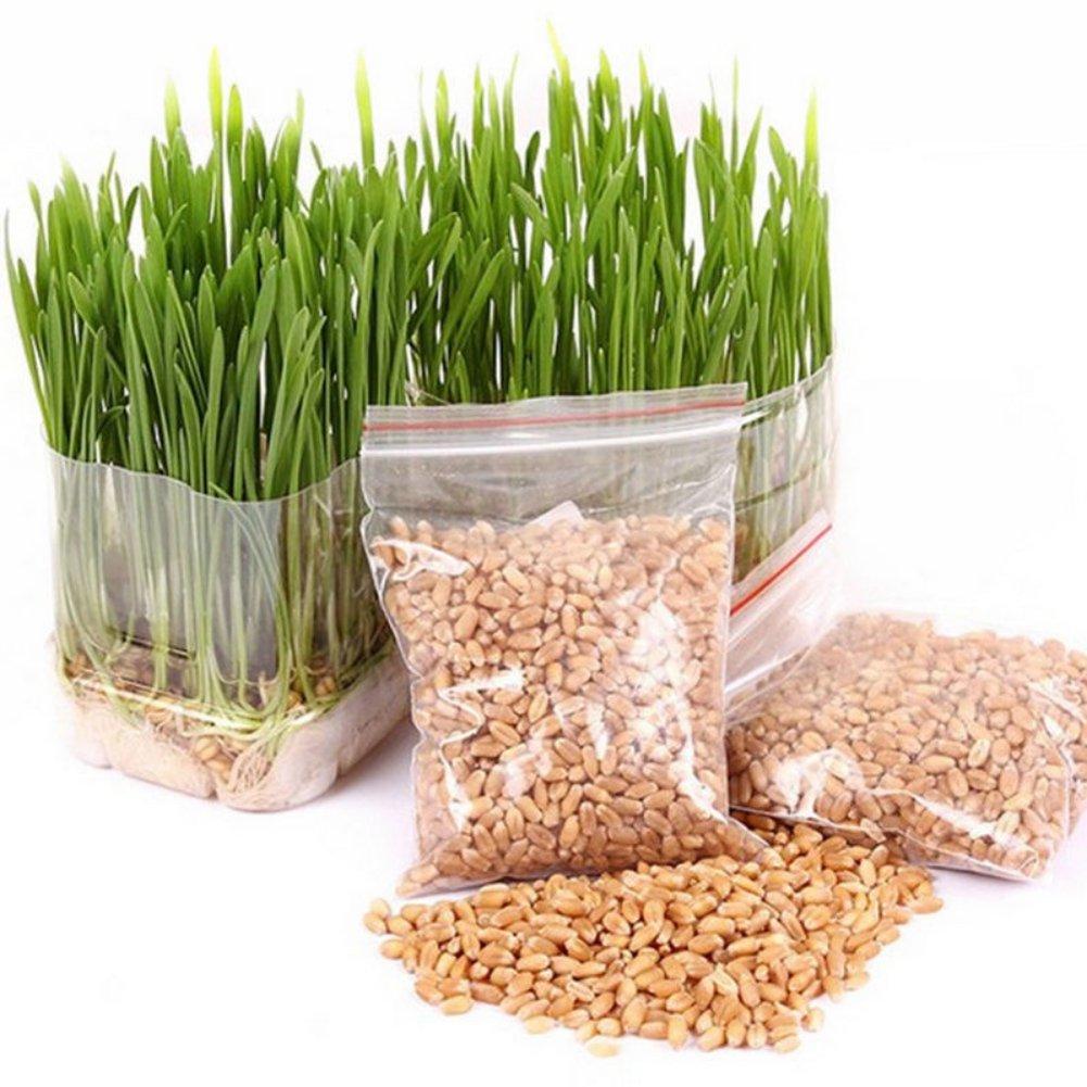 800 Pieces Cat Grass Seeds Wheat Grass Seeds Organic Seeds Growing Grass for Dog, Cat, Rabbit, Guinea Pig