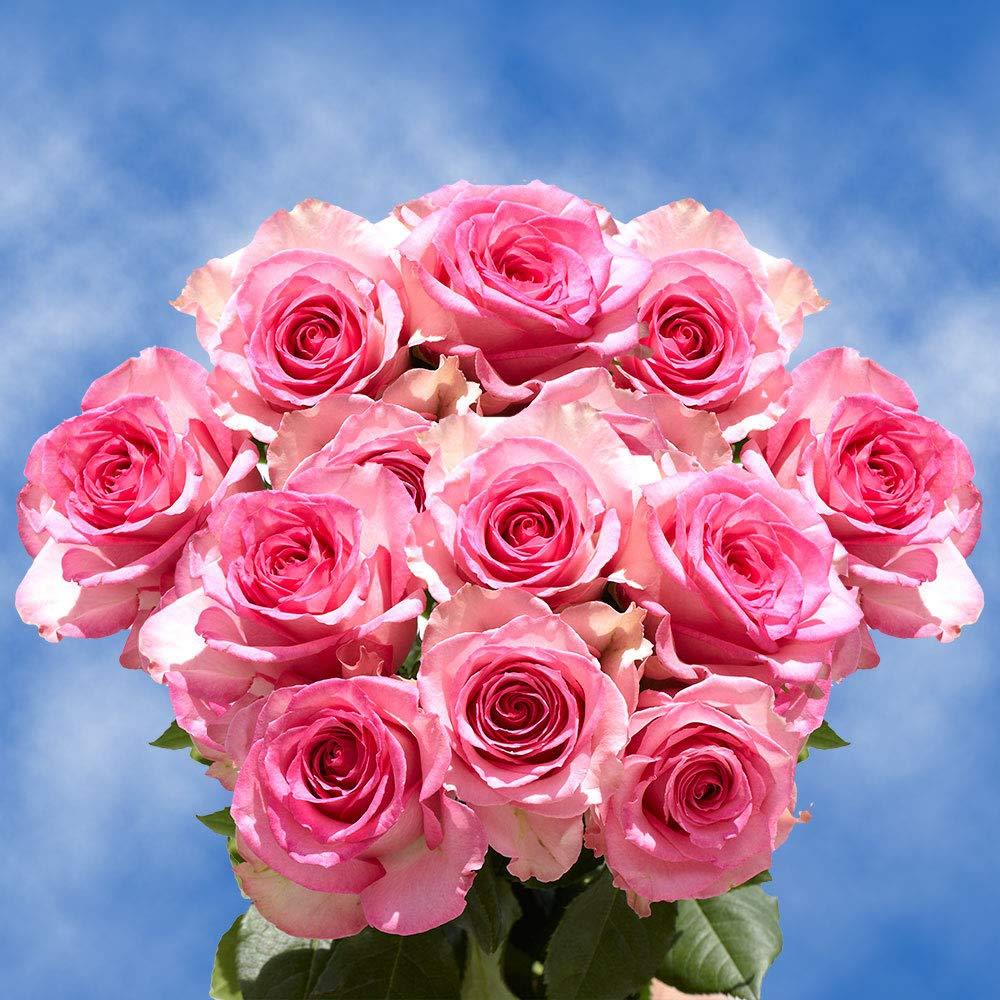 Amazoncom Globalrose 50 Fresh Cut Happy Anniversary Pink Roses