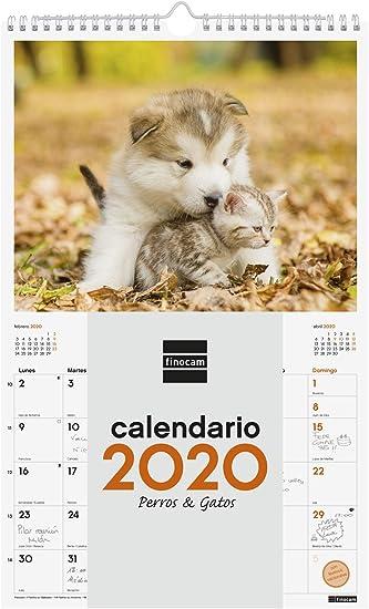Finocam - Calendario de pared 2020 Imágenes Espiral 25x40 Perros y Gatos español: Amazon.es: Oficina y papelería