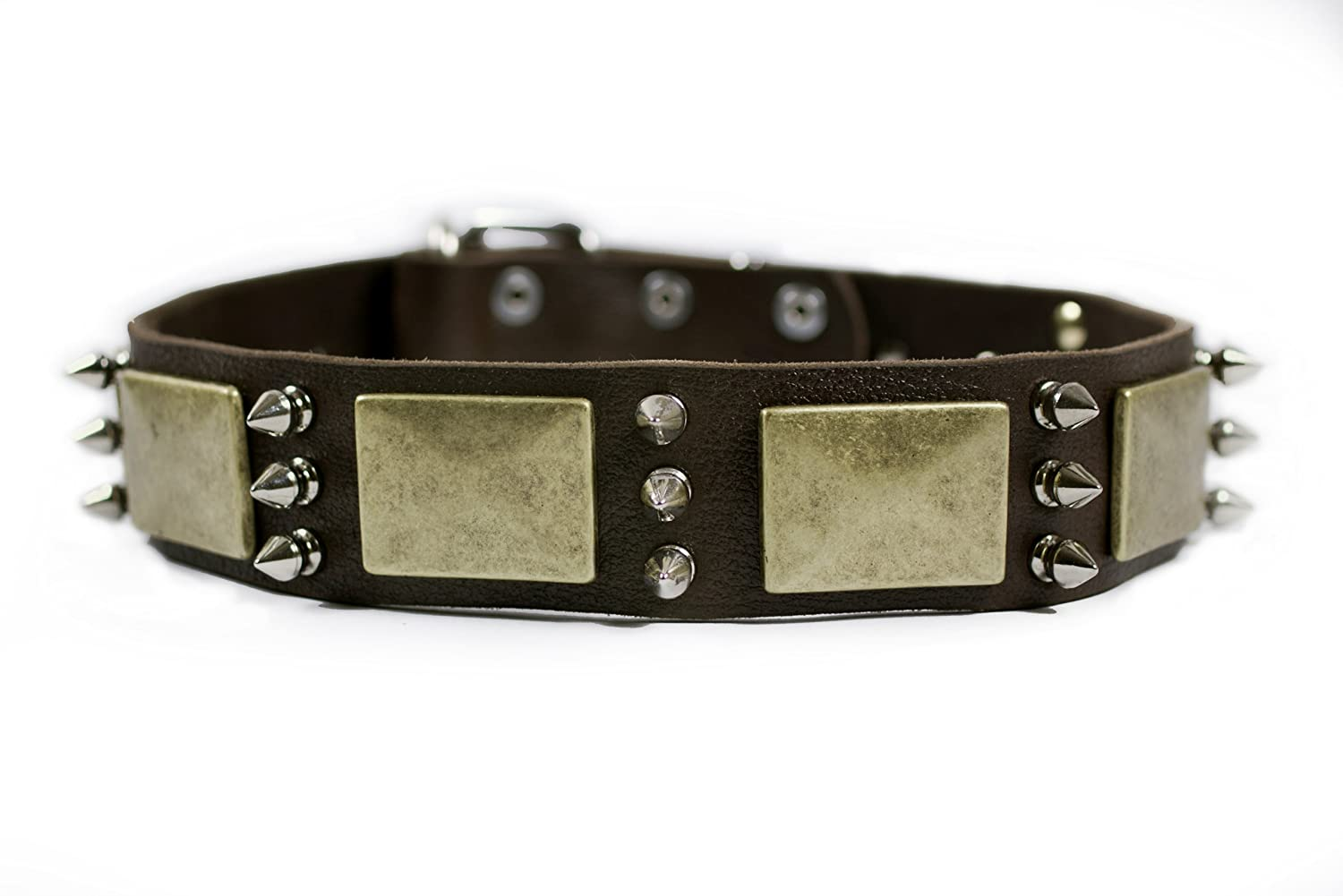 Dean and Tyler Beauty and The Bold , Dog Collar with Brass Plate and Nickel Spike Brown Size 22-Inch by 1-1 2-Inch Fits Neck 20-Inch to 24-Inch