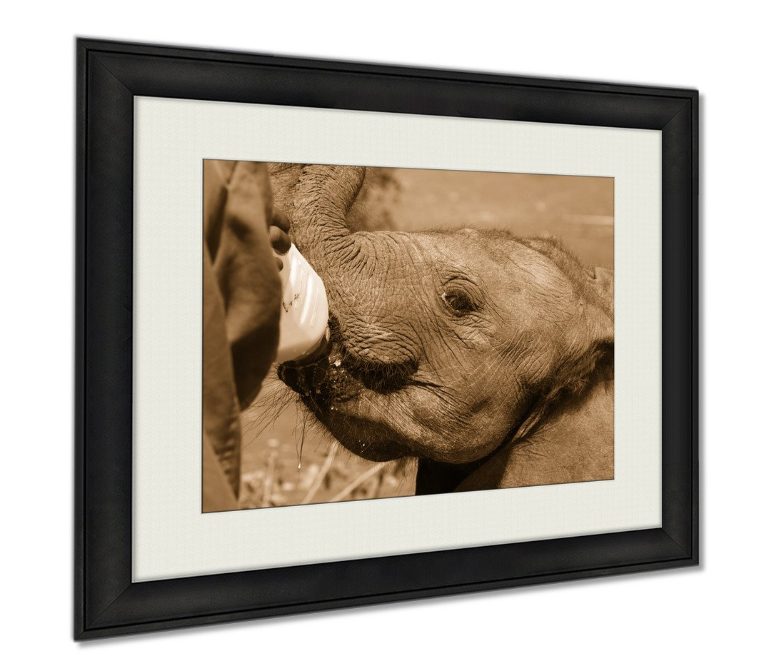 Ashley Framed Prints Surrogate Mother Young Elephant Feeding David Sheldrick Wildlife Trust Nairobi, Wall Art Home Decoration, Sepia, 26x30 (frame size), AG5929465