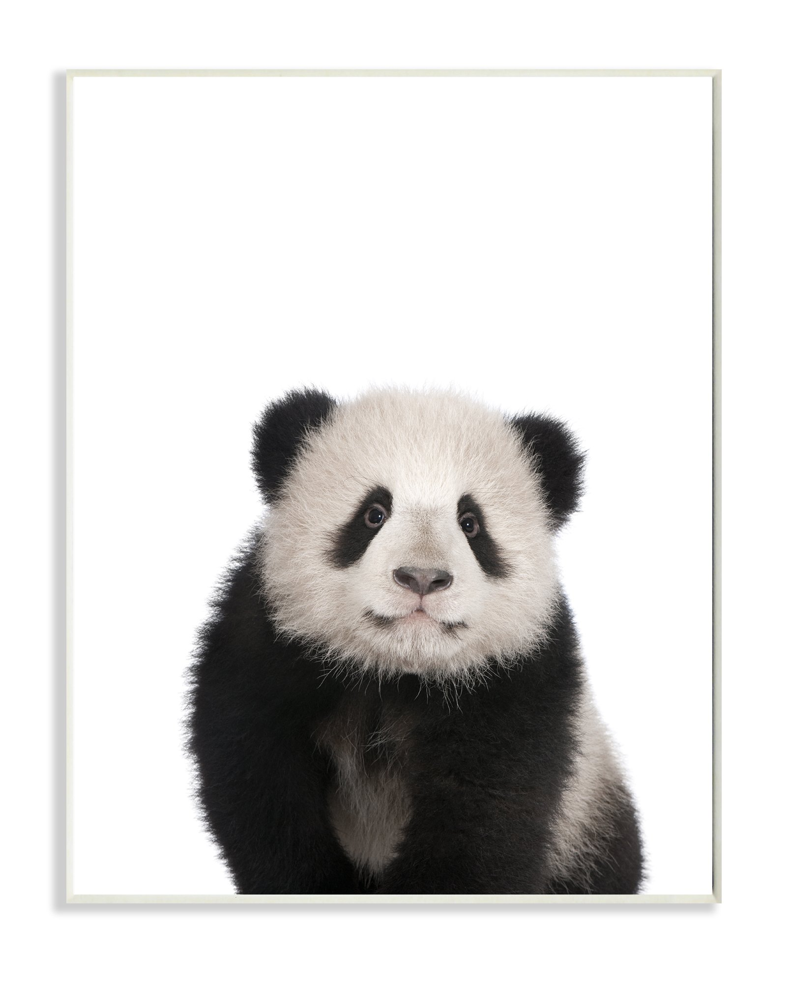 The Kids Room by Stupell Stupell Home Décor Baby Panda Studio Photo Wall Plaque Art, 10 x 0.5 x 15, Proudly Made in USA