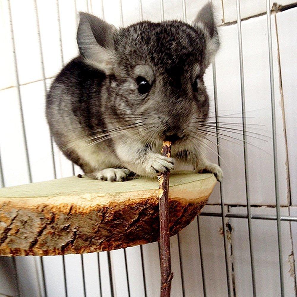 200g?7oz? Pet Snacks Organic Apple Sticks Bonus for Squirrel Rabbits Guinea Pigs Chinchilla Rabbits Parrot Bird and Other Small Animals Chew Toys AiMiiNiii