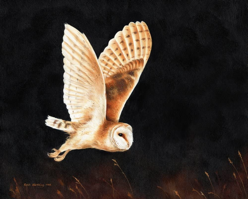 Amazon Com Posterazzi Barn Owl Flying Poster Print By Sarah Stribbling 10 X 5 Posters Prints