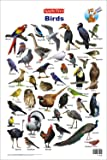 Educational Charts :: Birds