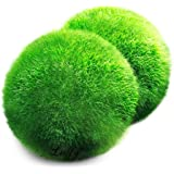 2 Luffy Giant Marimo Moss Balls -- Bring home Japan's National Treasure - Use it as Aquarium Decor or a Perfect heirloom Gift - Symbolize eternal love - Eco-friendly, Good luck charm