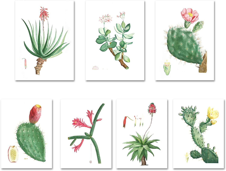 Vintage Cactus Print Set, Set of 6 Prints, Southwestern Decor, Antique Botanical Prints, Aloe, Prickly Pear, Rattail, Botanical Print Set (8x10inch(20x25cm))
