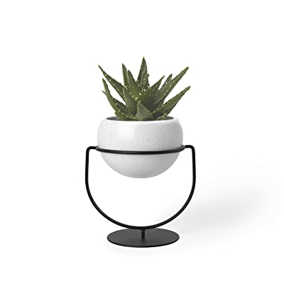 Umbra Nesta, Table Top or Hanging Modern Planter, Ideal Succulent Plant Holder, White/Black: Home & Kitchen