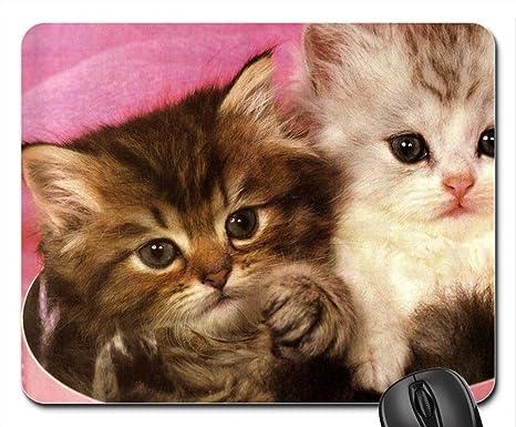 Caja de forma segura en un de gatos con gorro de dos hojas del ratón,